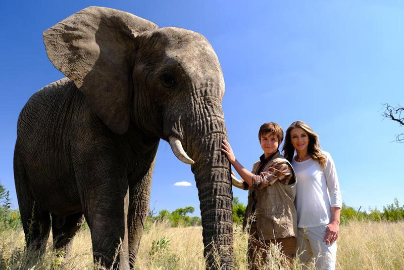 'Phoenix Wilder' Examines the Tragedy of Elephant Trophy Hunting